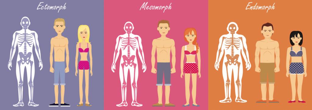 illustration des morphotypes