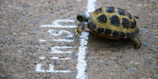 tortue à la ligne d'arriver d'une course