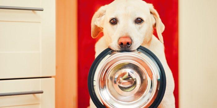 chien qui demande de la nourriture