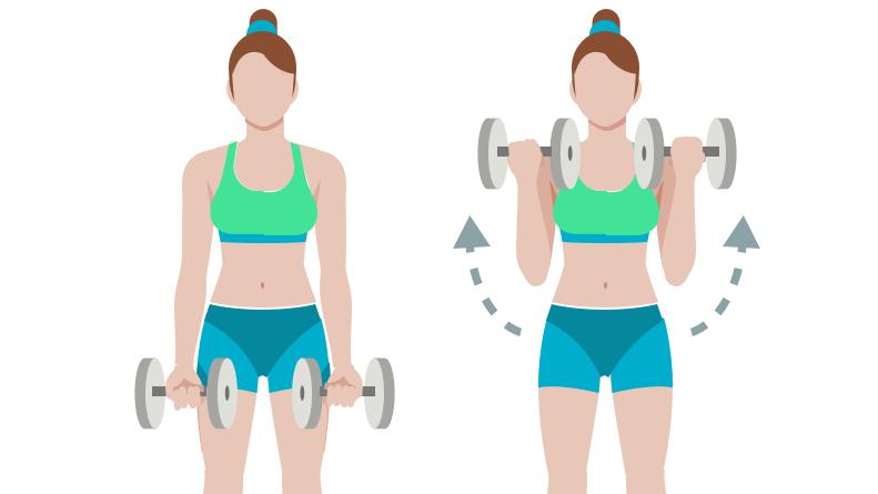 dessin démonstratif de l'exercice de musculation du biceps curl