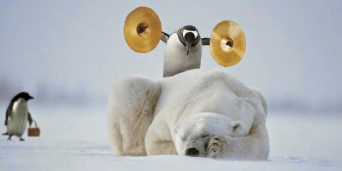 ours blanc qui dors et pingouin